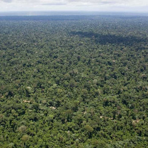 Wild Amazon Faces Destruction as Brazil's Farmers and Loggers Target National Park