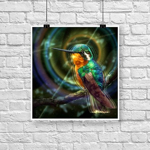 Colibri Vibes