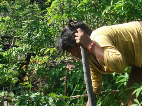 Facing Agro-biodiversity