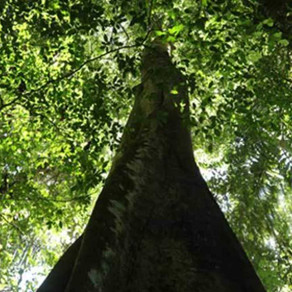 Amazon infrastructure EIAs under-assess biodiversity; scientists offer solutions