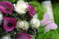 Hot pink calla lilly