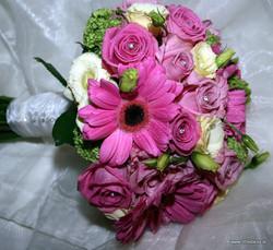 pink daisy flowers