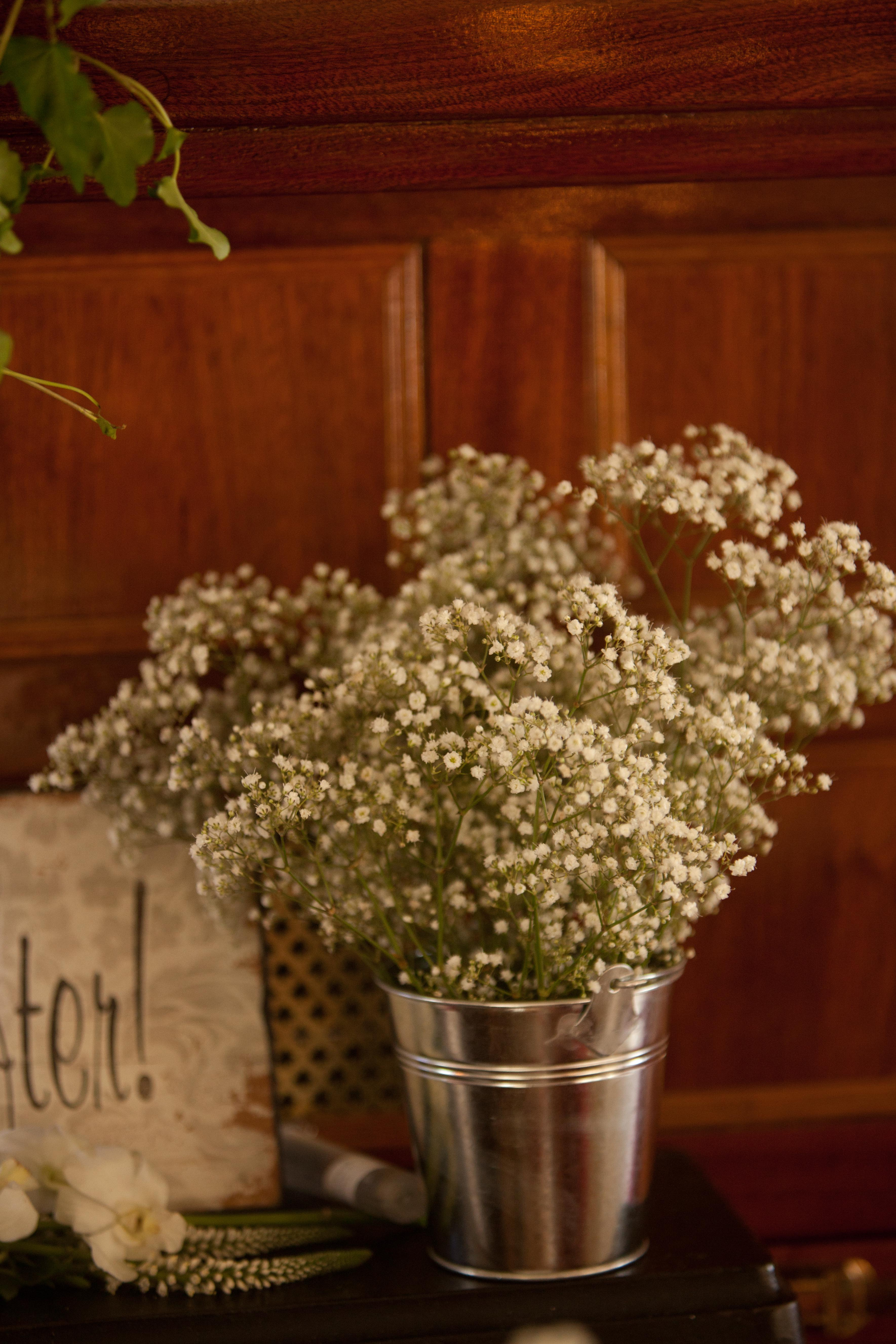 white gypsophilia