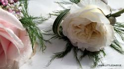 David Austin white rose