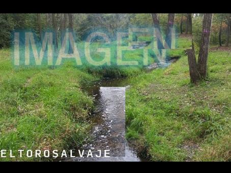 La imagen y la palabra imagen