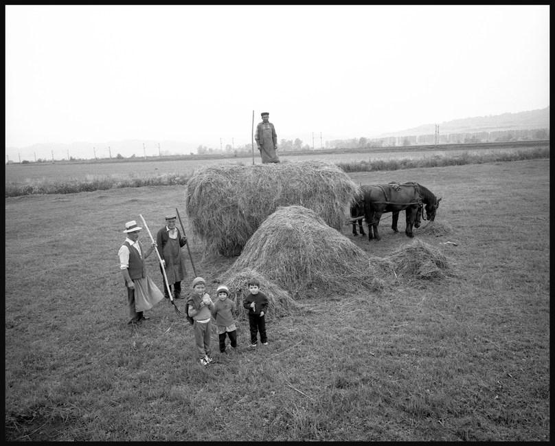 Harvest time near Cluj. July, 1987.