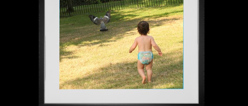 Catch the Pigeon