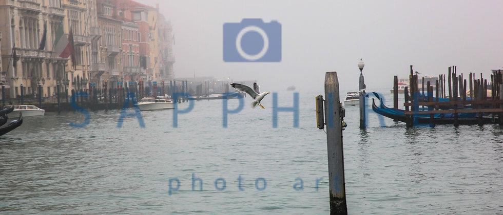 Seagull in Flight, Grand Canal, Venice