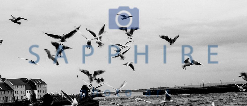 The Birds - Galway