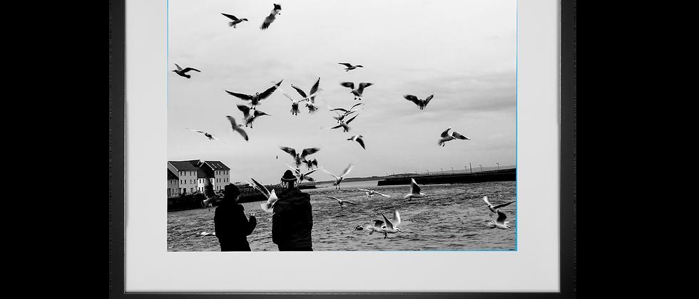The Birds, Galway