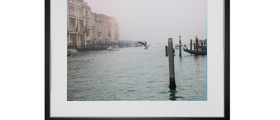 Seagull in Flight, Grand Canal, Venice