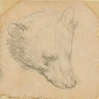 Un nouveau Léonard sur le marché : le croquis d'une tête d'ours