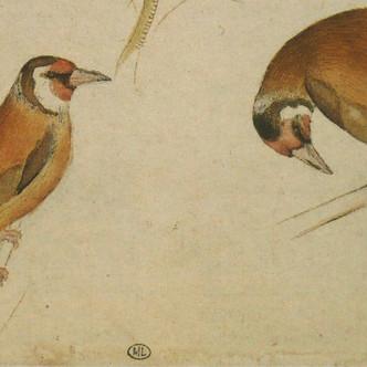 Le Codex Vallardi : la nature par Pisanello