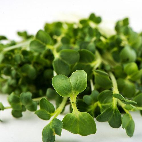 Broccoli Brassica Blend Microgreens