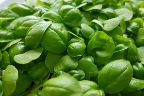Micro Basil Microgreens
