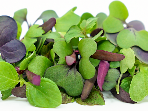 Little Greens, Big Nutrition. Why Microgreens are so good for you and why you should try them.