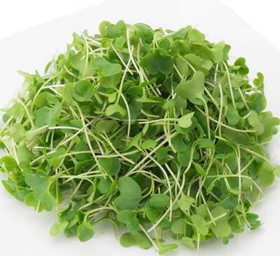 Broccoli Microgreens, a tiny superfood with huge benefits and why it knocks out full grown Broccoli.
