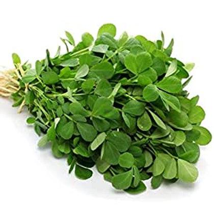 Fenugreek Microgreens
