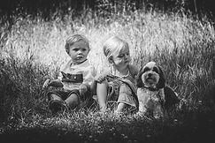 Calgary Bichon Shih Tzu Puppies