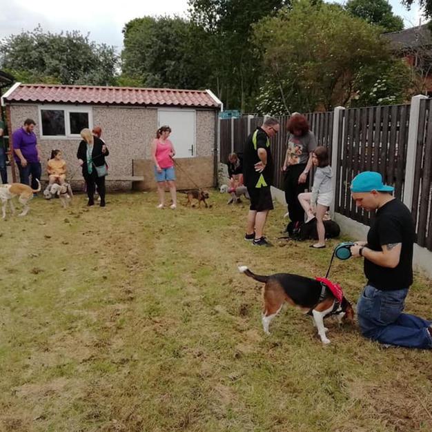 Summer Fayre Dog Show