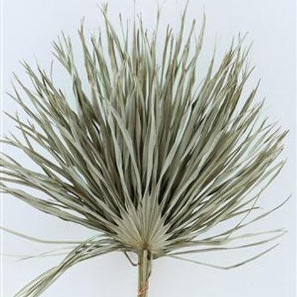 Feuille de palmier séché