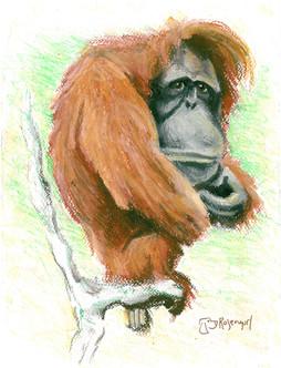 Orangutan - Comission