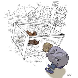 Adopte une poule