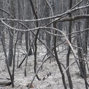 Et si on devait traverser cette forêt en feu?  Apocalypse - Sologne 2020