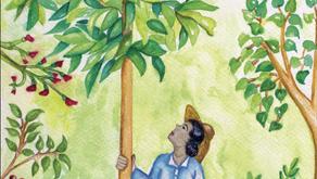 Manual de restauración ecológica con árboles nativos en Marqués de Comillas, Selva Lacandona