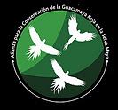 Guacamaya PNG.webp