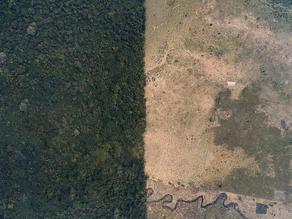 Biólogos y científicos mexicanos se movilizan en Chiapas para disminuir las amenazas que se ciernen