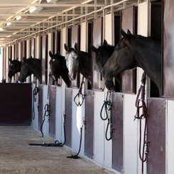 Equestrian Facilities.jpg