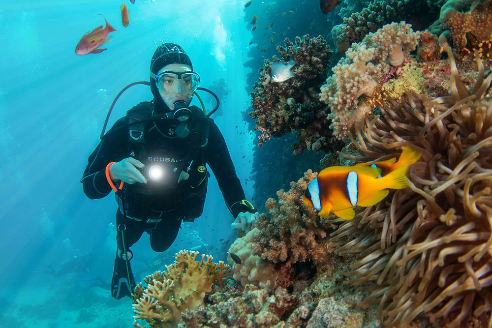 Safaga diving. 7 Best Diving Destinations in Egypt's Red Sea For Divers Of All Levels