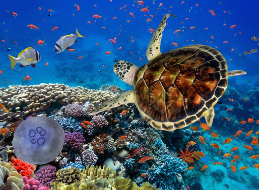 7 Best Diving Destinations in Egypt's Red Sea for Divers of All Levels
