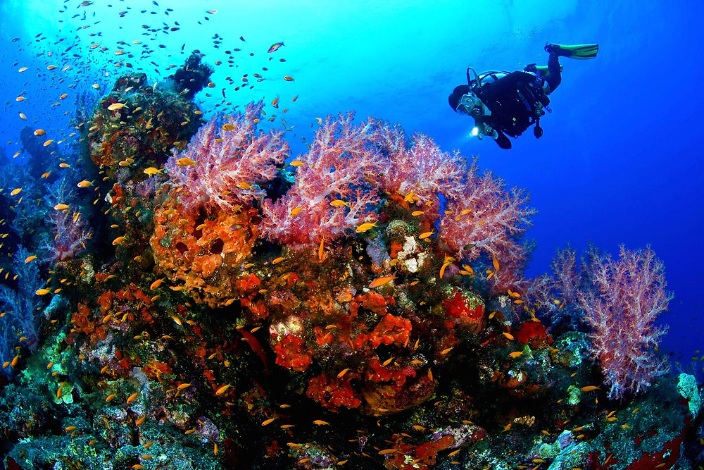 Hurghada diving. 7 Best Diving Destinations in Egypt's Red Sea For Divers Of All Levels