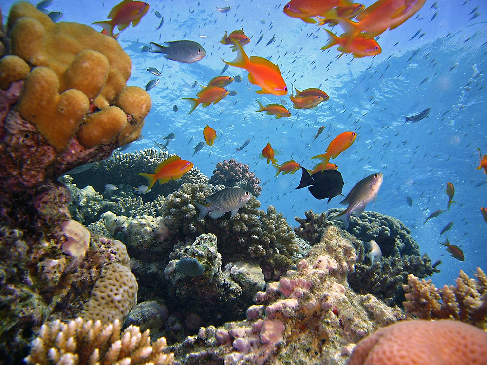Scuba Diving in the Red Sea in Egypt. Sharm el Sheikh, Dahab, Hurghada, Marsa Alam. Egypt is one of the best diving destinations in the world and one of the best 2019 travel destinations