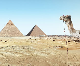 igc camel.jpg