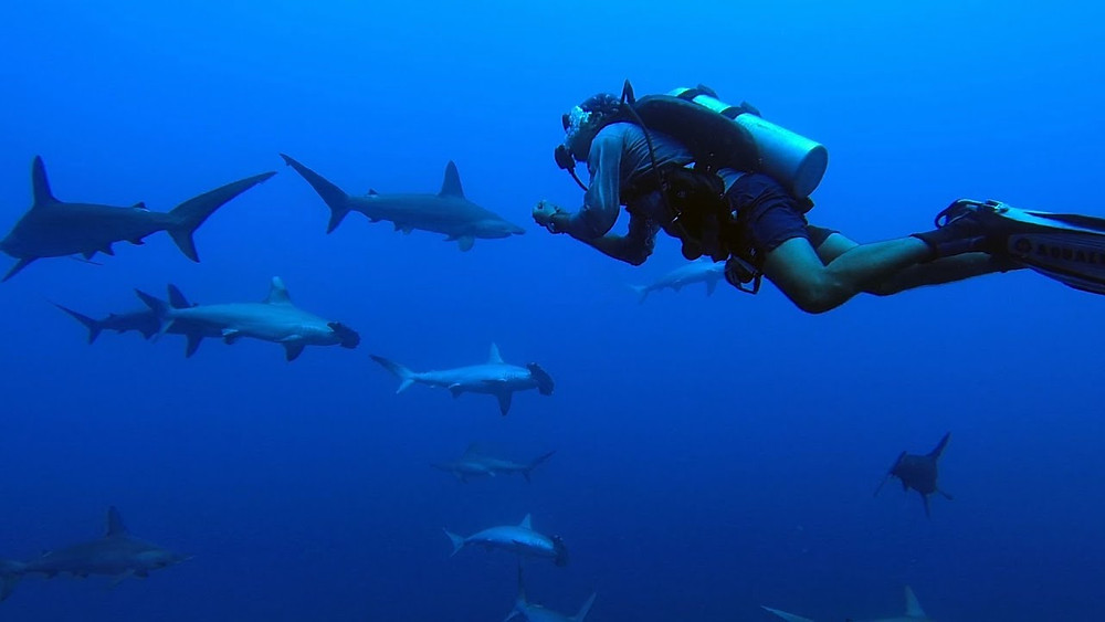 Egypt deep south diving. 7 Best Diving Destinations in Egypt's Red Sea For Divers Of All Levels