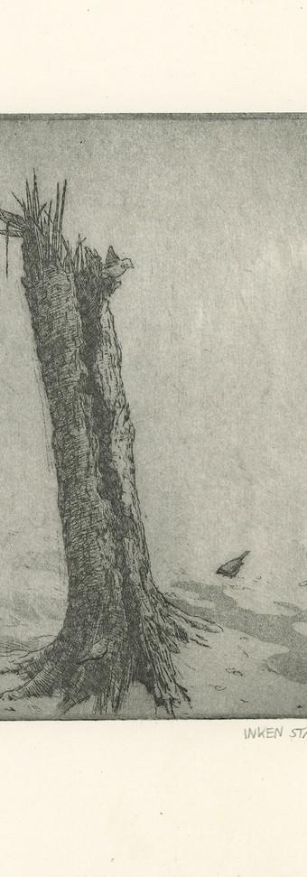 Birch stump with Sparrows
