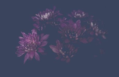 Dahlia%20Flower_edited.jpg