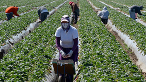 Farmworkers Are Essential