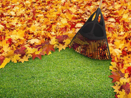3 Reasons Why You Need A Fall Clean-Up