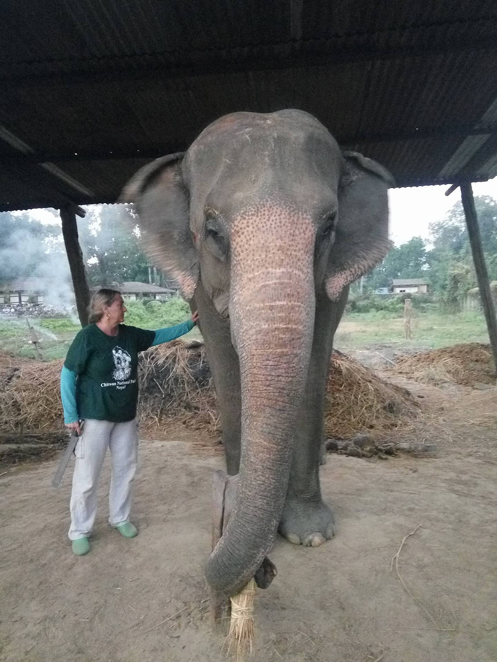 Founder Coranne providing respite care for working elephants of Nepal