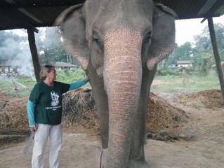 New Hope for Elephants of Nepal