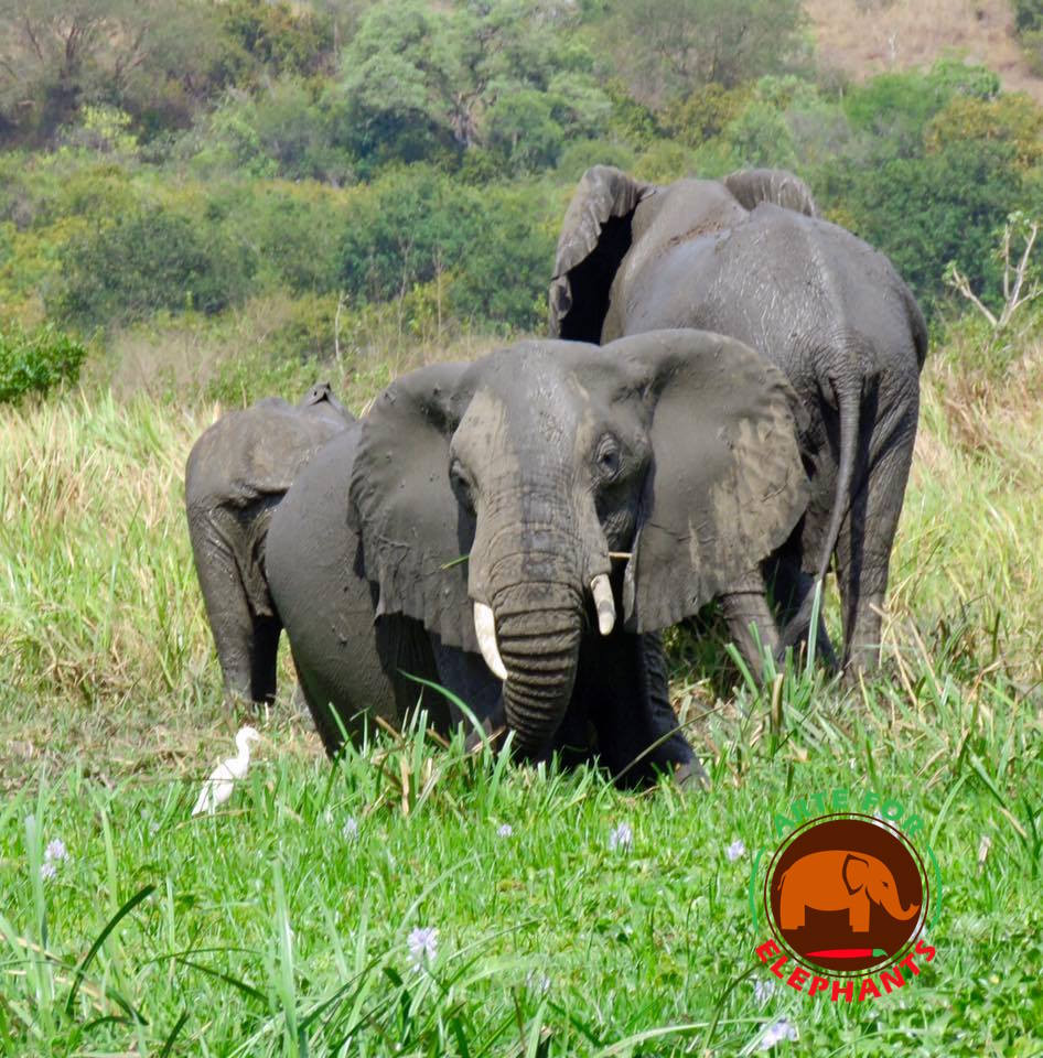 In the wild, elephants enjoy space, freedom of choice,