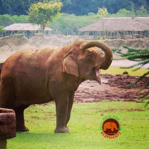 Big Elephant Magic Thailand-A Journey Well Taken