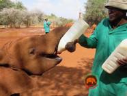 Sheldrick Wildlife Trust (D. Rutter)