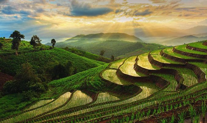 Terraced Rice Field in Chiangmai, Thailand.jpg