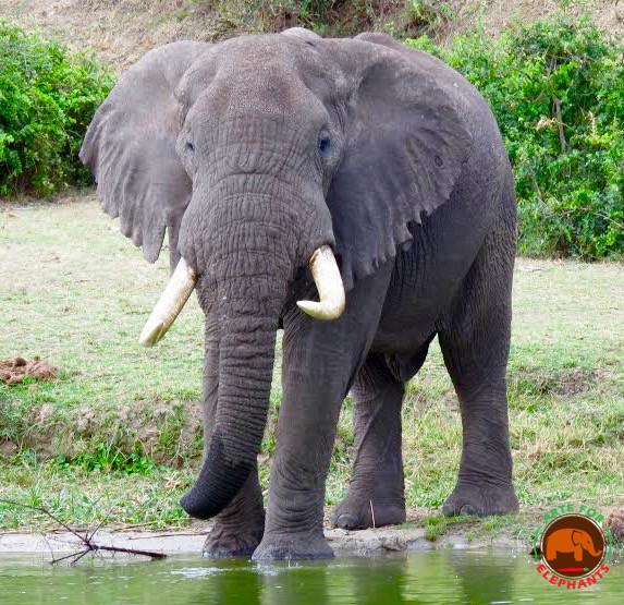 Photo D. Rutter Arte for Elephants