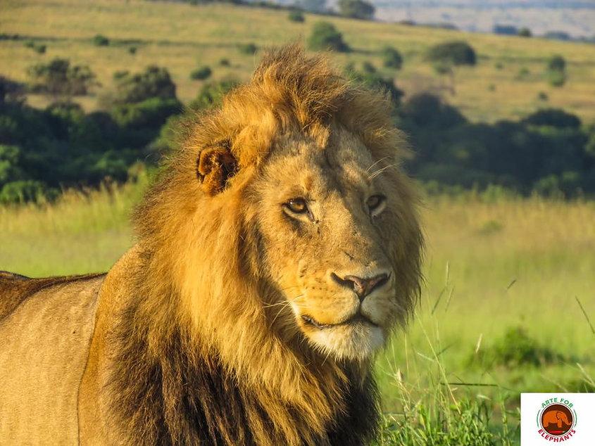 BEM Lion.jpg
